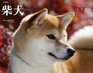 2016年柴犬