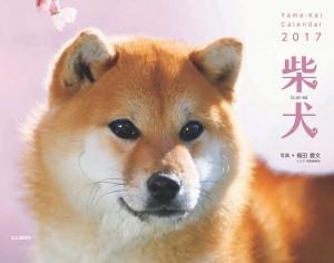 柴犬(ヤマケイ)a